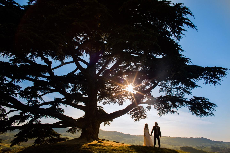 Cedro delle Langhe tramonto