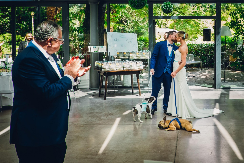abiti cerimonia cani