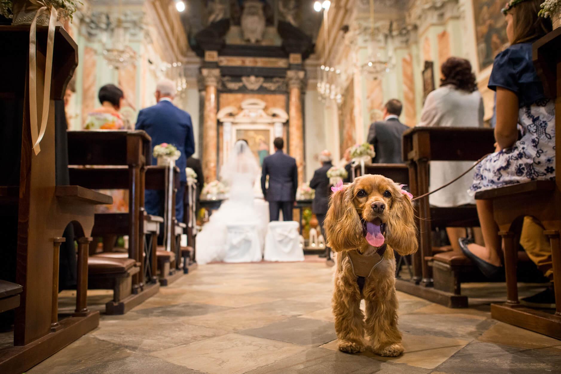 cane matrimonio chiesa
