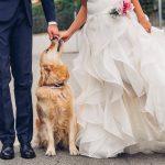 cani matrimonio consigli