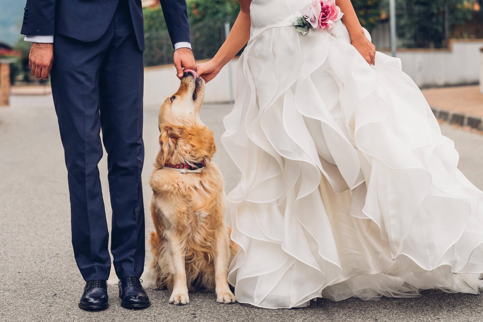 Matrimonio Uomo Cane : I cani al matrimonio ecco come far partecipare anche loro