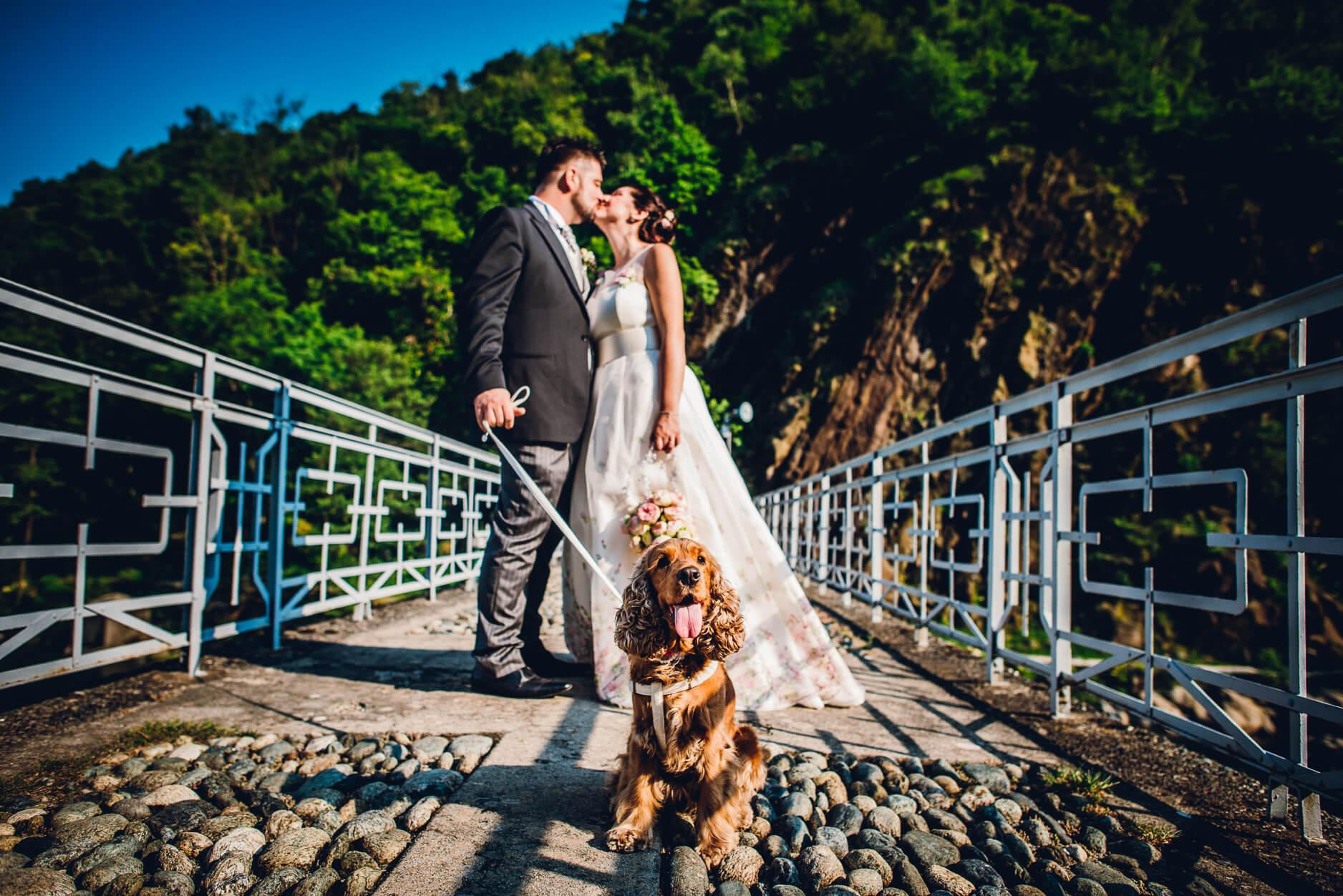 matrimonio con cane