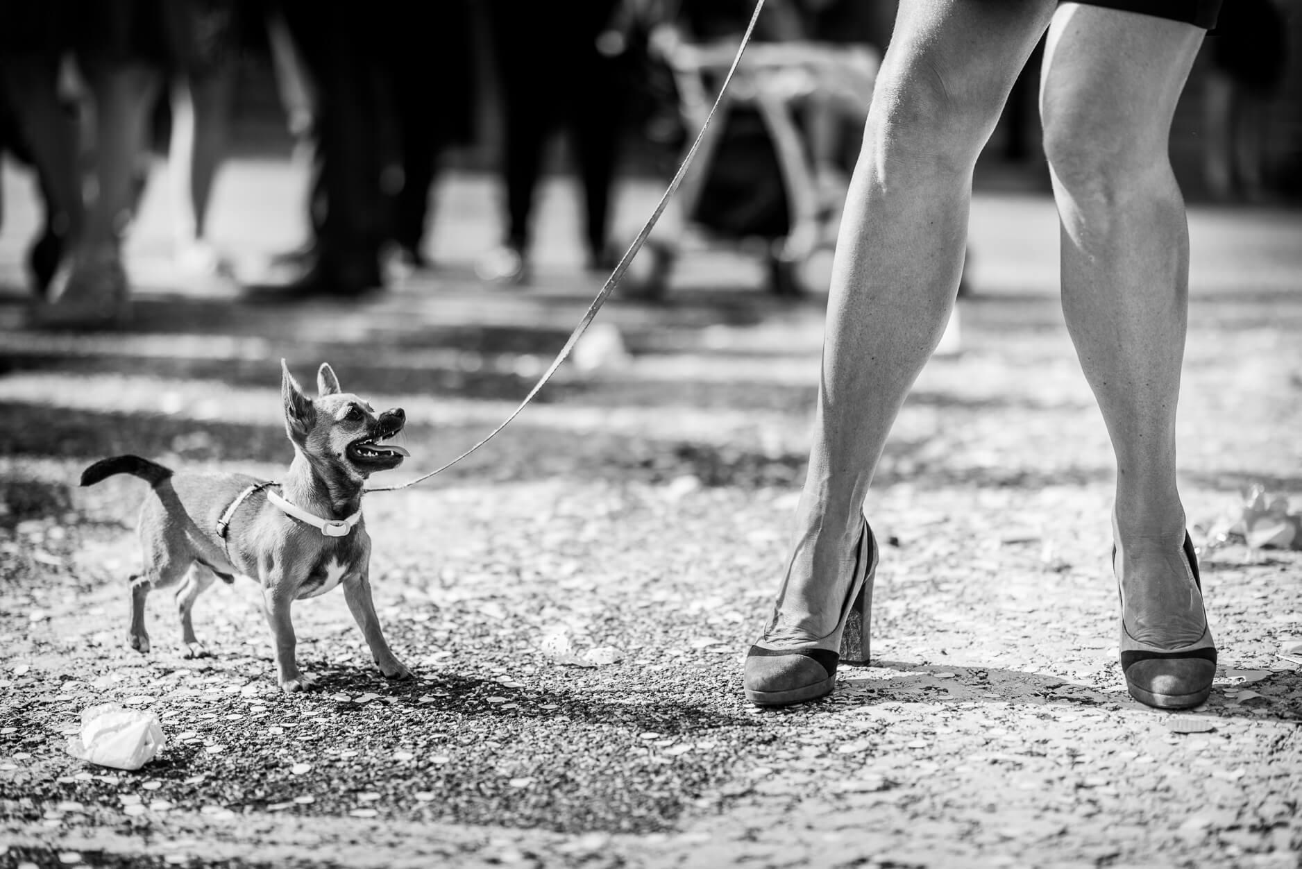 fotografo matrimonio cane erwitt