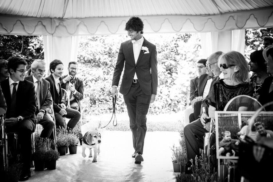 Cerimonia matrimonio cane